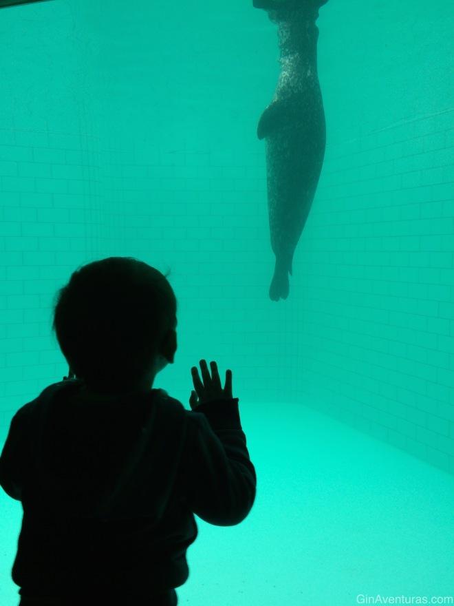 Admirando la vida marina