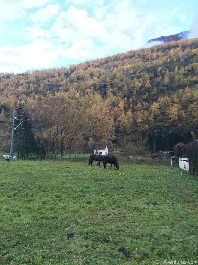 Copo disfrutó ver a estos caballos