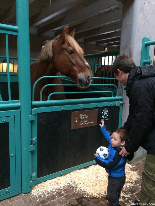 Encuentro cercano con los caballos de Jutlandia