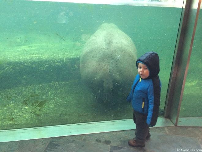 Admirando el culito de un hippo