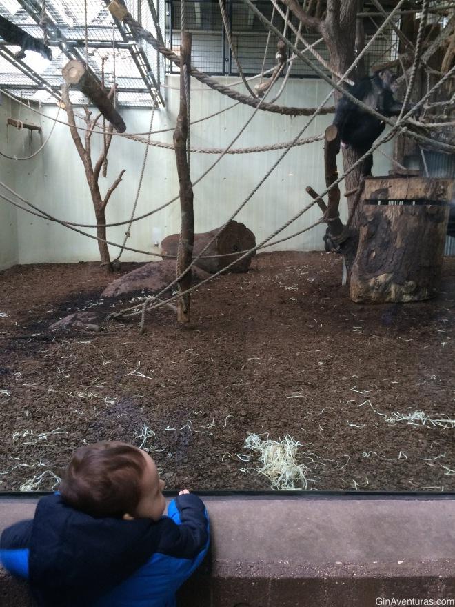 Viendo los monos, quienes seguramente le recordaron a Curious Geroge