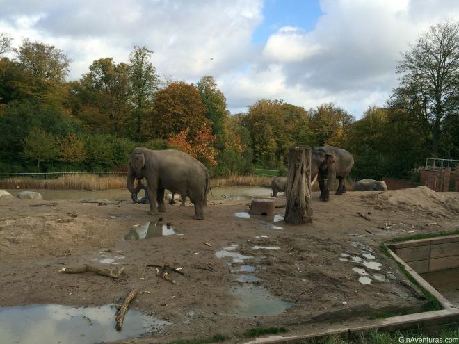 Area de elefantes