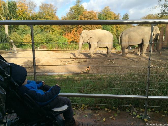 Los paquidermos tenían el área más grande del zoo