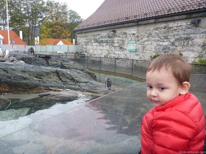 Admirando a sus amigos pingüinos