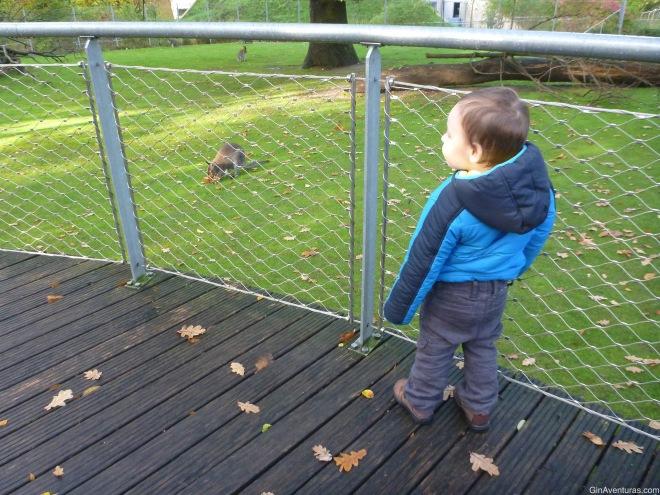 Admirando a los canguros