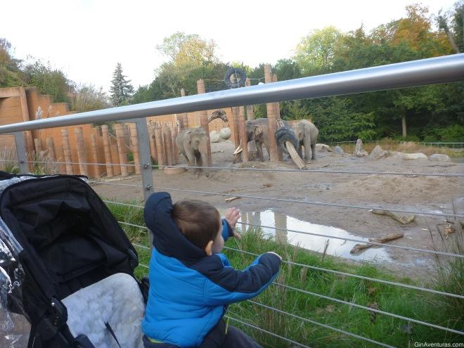 Admirando a los elefantes