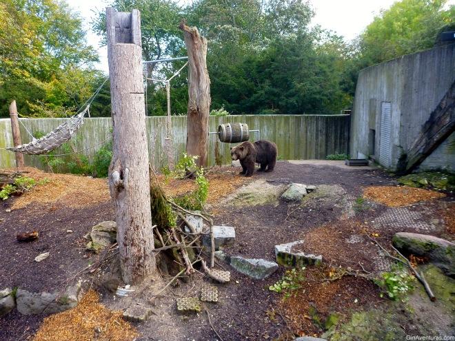 Área de osos americanos