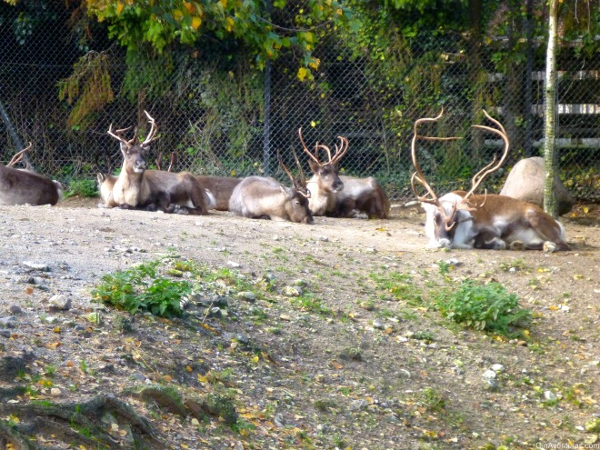 Nuestros amigos los renos