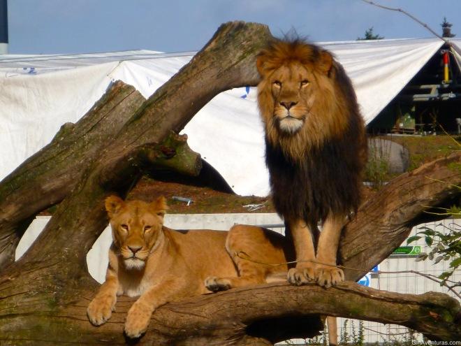 Los reyes de la selva posando ante las cámaras