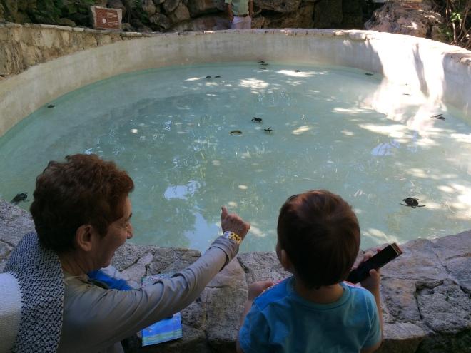 Aprendiendo sobre tortugas