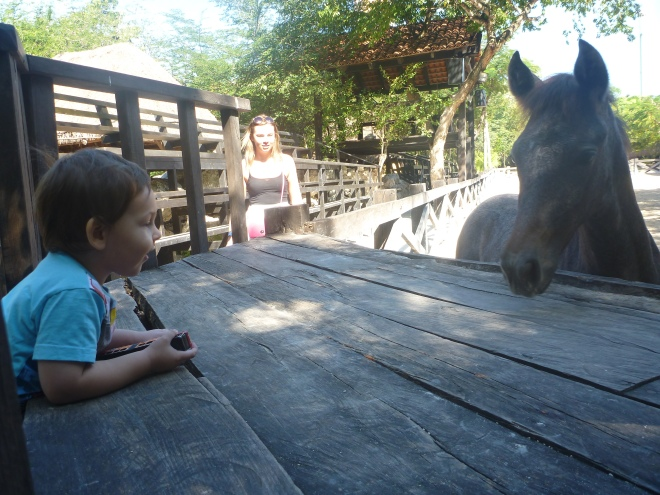 hello horse!