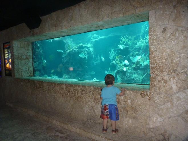 Disfrutando del bello acuario