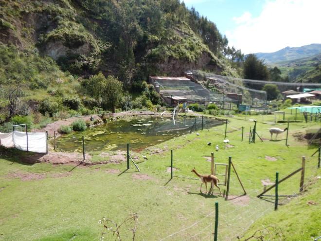 Santuario animal Ccochahuasi