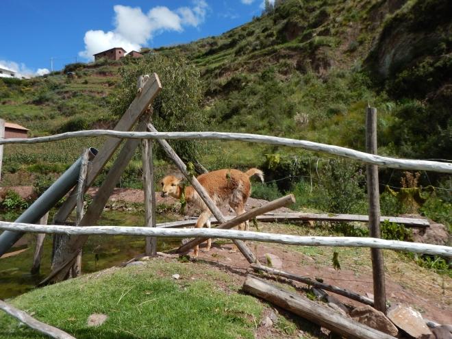 Disfrutamos admirando a los animales sudamericanos
