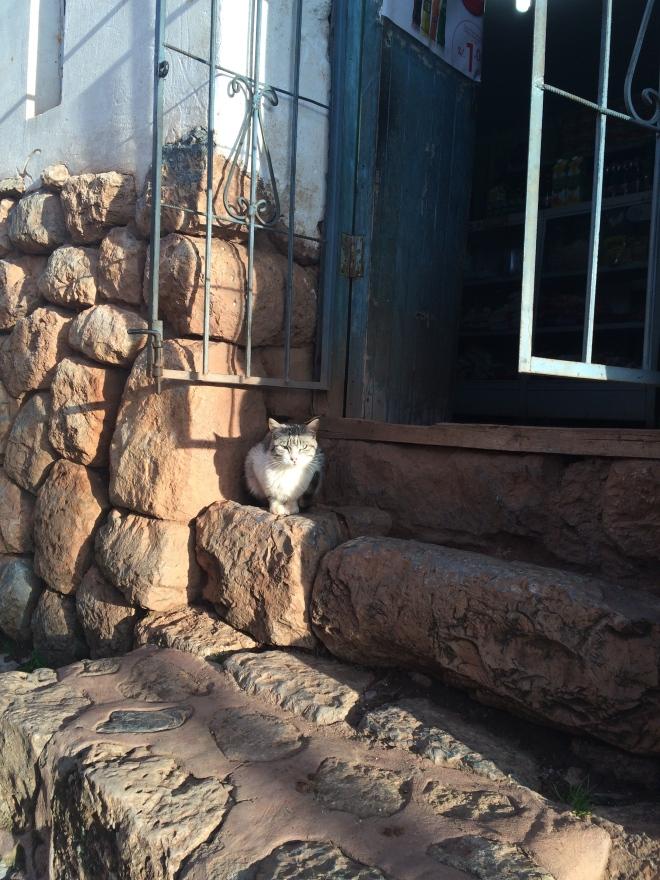 Un gato disfrutando la tarde en Chinchero