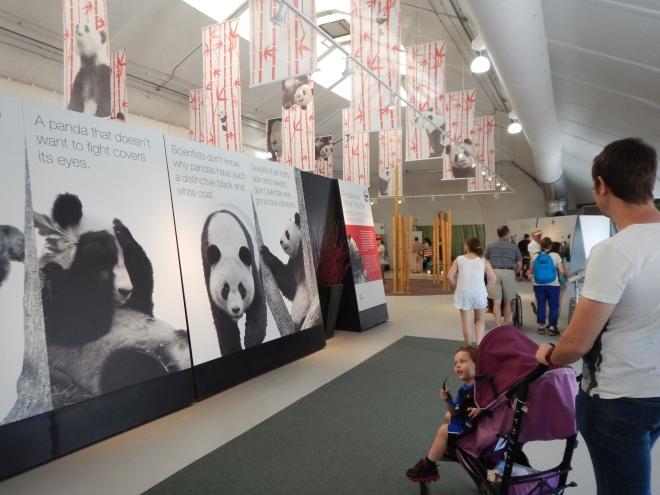 Exhibición de Pandas en el Toronto Zoo
