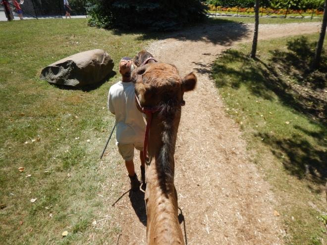 Paseando en camello