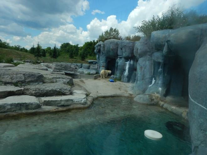 Exhibición de osos polares